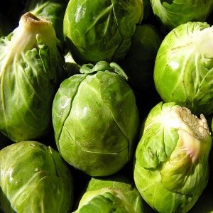 Brussels Sprouts - Cole crop